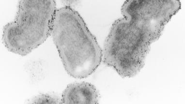 oral bacteria | ismile